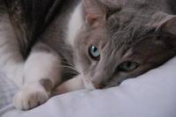 猫の日 - aya's photo