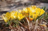 早春の小さなローズガーデン - 季節の風を追いかけて