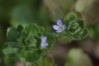野辺の草花 ② - ecocoro日和