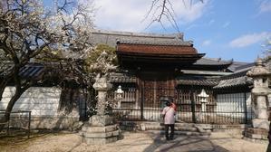 梅林寺の梅 -