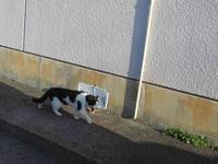 今日は猫の日 - 写真撮り隊の今日の一枚2