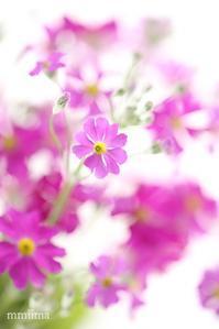 春よ来い♬ - マイ・ライフ