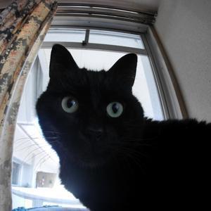 猫の日 - _t_a_l_k_t_o_m_y_s_e_l_f_