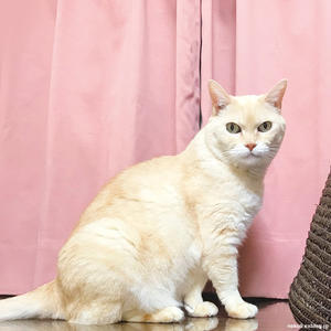 【猫の室内飼いの工夫】大きめのトリカルネット - 賃貸ネコ暮らし|賃貸住宅でネコを室内飼いする工夫