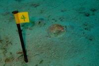 19.2.23課題に向き合いましょう - 沖縄本島 島んちゅガイドの『ダイビング日誌』