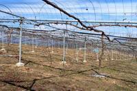 明日からピオーネ - ~葡萄と田舎時間~ 西田葡萄園のブログ