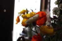 花はおしえてくれる - 雲の行く先