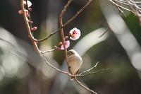 ニシオジロビタキ02月23日 - 旧サンヨン野鳥撮影放浪記