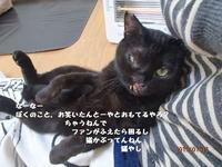 イケてるメンズ - 八幡地域猫を考える会