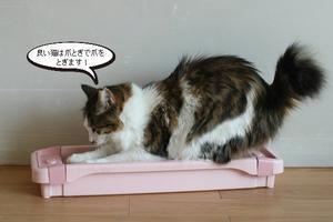 爪とぎでバリ、バリバリ~ - 保護猫さんのご縁探し