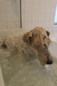 温泉気分な愛犬 - フェルタート(R)・オフフープ(R)立体刺繍作家PieniSieniのブログ