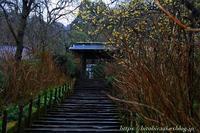 冬の北鎌倉明月院② - 暮らしを紡ぐ