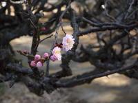 春を探してサイクリング - pottering