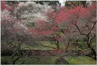 宇和島円山公園の「梅園」 - ハチミツの海を渡る風の音
