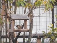 鳥のあそぶ庭・子育ての庭 - 創造の加子母(かしも)っ子タイム