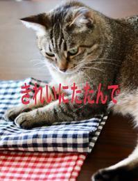 にゃんこ劇場「ワル猫さん登場」 - ゆきなそう  猫とガーデニングの日記