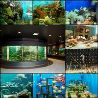 海と水族館と南方熊楠 - ひとりあそび