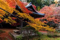 京の紅葉2018染まる勝持寺 - 花景色-K.W.C. PhotoBlog