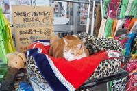 【沖縄で一番有名な猫店長】みーちゃんがいる嘉数商会@那覇 - SAMのLIFEキャンプブログ Doors , In & Out !