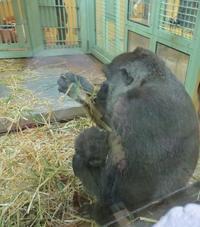 「BHさん、インスタ!!」+「京都動物園」2/24(日) - あばばいな~~~。