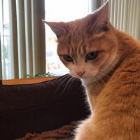 猫の日は、過ぎたけど、、 - ひいぽぽタイムスNO.2