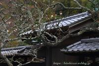 冬の北鎌倉東慶寺③ - 暮らしを紡ぐ