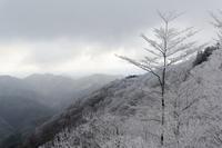 霧氷~白い夜明け - katsuのヘタッピ風景
