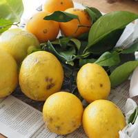香り豊かな贈り物 - sola og planta ハーバリストの作業小屋