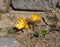 四季の庭で感じる春の訪れ - 神戸布引ハーブ園 ハーブガイド ハーブ花ごよみ