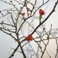 春の便りがすぐそこまで! - 坂本これくしょん 公式ブログ | SAKAMOTO COLLECTION BLOG