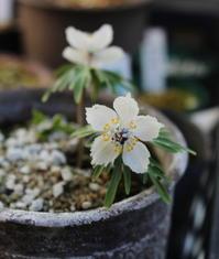 早春の花たち - 野山の花たち