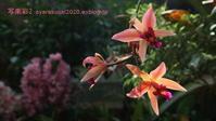 植物園に行く2月-10 - 写楽彩2