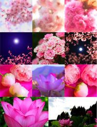 ピンクだらけ - poem  art. ***ココロの景色***