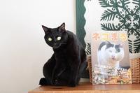 「ネコまる冬春号2019 Vol.37」に載せていただきました - きょうだい猫と仲良し暮らし
