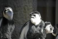 今日の上野動物園無料開放日 - みるはな写真くらぶ