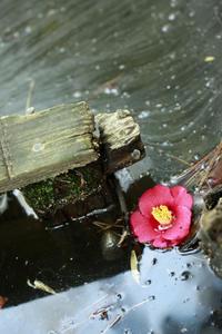 ちょっと梅を食べ過ぎたので口直しで、小石川後楽園 - meの写真はザンス