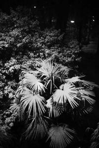 夜の散歩(4cut)雪の日 -     ~風に乗って~    Present