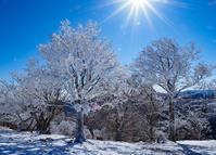 【台高】霧氷降りしきる東尾根から桧塚劇場周遊2019/1/4 - 流雲 蒼穹 風に吹かれて