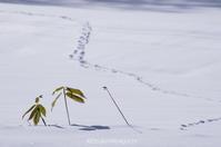 近づく春 - ekkoの --- four seasons --- 北海道