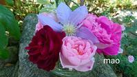 小さな花壇から - 菫青石に天の川