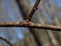 越冬卵の弾丸探索その1 - 蝶超天国
