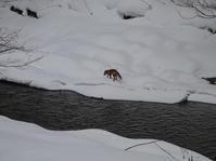 川の向こうに。 - ヒロムシ君のお散歩日記