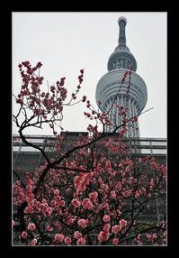 スカイツリーに梅の花 - Desire