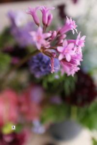 1月の「亮子さんのフラワーレッスン」 - Bouquets_ryoko