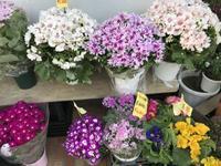 花市場へ植木鉢を買いに - 青山ぱせり日記