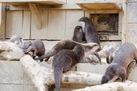 埼玉県こども動物自然公園2019年2月24日その2 - お散歩ふぉと2