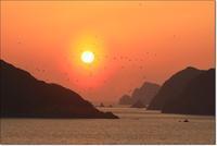 海峡夕日に集まる鳥さんたち - ハチミツの海を渡る風の音
