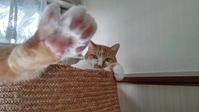 【猫】足が! - 人生を楽しくイきましょう!