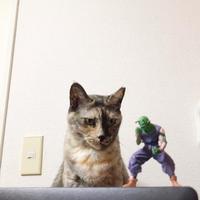 キューちゃんと師匠 - 賃貸ネコ暮らし|賃貸住宅でネコを室内飼いする工夫