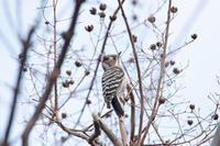 野鳥観察レポート0226 - 花鳥風月…空Photo blog